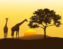 长颈鹿sihouette 免版税库存照片