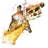 长颈鹿T恤杉图表 长颈鹿与飞溅水彩的家庭例证构造了背景 异常的例证水彩 免版税库存照片