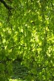 长,灵活的树枝 免版税库存图片