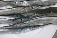 长嘴硬鳞鱼照片  免版税图库摄影