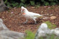 长嘴鸟的科雷利亚 库存照片