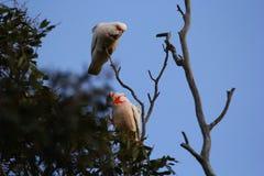 长嘴鸟的科雷利亚 免版税库存图片