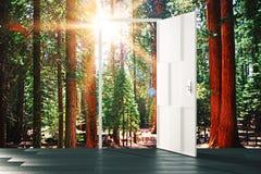 门户开放主义对晴朗的森林概念 库存图片
