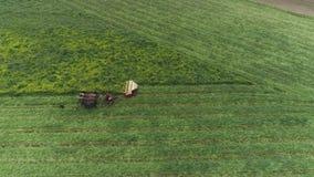 门诺派中的严紧派的农厂工人在春天的收获领域有4匹马和3条狗的如看见由寄生虫 股票录像