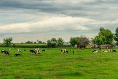 门诺派中的严紧派的国家农厂谷仓领域农业和吃草母牛在兰卡斯特, PA 库存照片