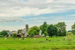 门诺派中的严紧派的国家农厂谷仓领域农业和吃草母牛在兰卡斯特, PA 库存图片