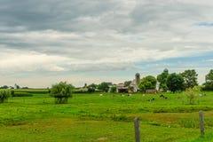 门诺派中的严紧派的国家农厂谷仓领域农业和吃草母牛在兰卡斯特, PA 免版税库存照片