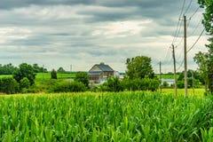 门诺派中的严紧派的国家农厂谷仓领域农业在兰卡斯特, PA 库存图片