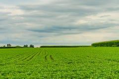 门诺派中的严紧派的国家农厂谷仓领域农业在兰卡斯特, PA 库存照片
