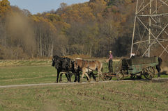年轻门诺派中的严紧派的农夫 图库摄影