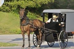 门诺派中的严紧派的多虫的马 免版税库存图片