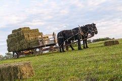 门诺派中的严紧派的干草无盖货车 库存照片