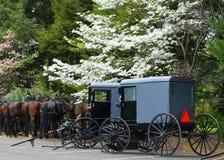 门诺派中的严紧派的马和儿童车在兰卡斯特, PA 免版税库存图片