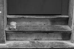 门阶 库存图片