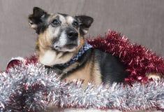 闪亮金属片和圣诞节装饰围拢的逗人喜爱小狗狗放松 库存图片