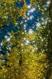 闪光和反射湖水和黄色叶子的阳光 背景 免版税库存照片