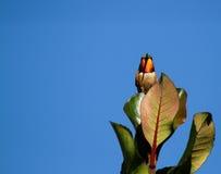 闪动的蜂鸟他的橙色喉头 库存图片
