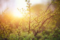 闪烁光生动的颜色弄脏了从叶子后面的bokeh弹簧 库存照片