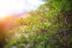 闪烁光生动的颜色弄脏了从叶子后面的bokeh弹簧 免版税库存图片