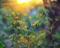 闪烁光生动的颜色弄脏了从叶子后面的bokeh弹簧 库存图片