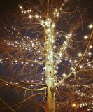 闪烁在晚上的圣诞树 库存照片