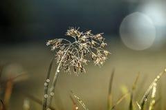 闪烁的植物 图库摄影