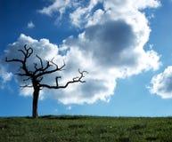 闪电结构树 免版税库存图片