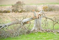 闪电被触击的结构树 库存照片