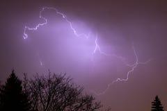 闪电顶部结构树 免版税图库摄影