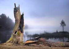 闪电击中的橡树 库存照片