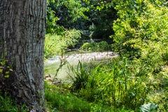 闪耀在阳光下的小浅小河通过树 库存图片
