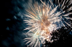 闪耀的烟花在从公园和树剪影看的夜 免版税库存图片