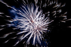 闪耀的烟花在从公园和树silhouett看的夜 免版税库存图片