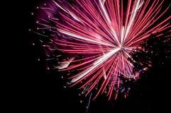 闪耀的烟花在从公园和树silhouett看的夜 免版税库存照片