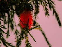 闪耀的红色花图象 库存照片