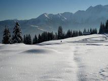 闪耀的雪 免版税图库摄影