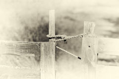 闭合的挪威农厂篱芭乌贼属背景 免版税库存照片
