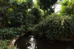 闭合的生物圈自一间热带温室 库存图片