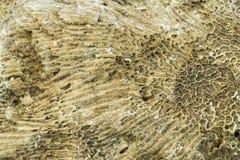 闭合的黄色soild岩石珊瑚纹理背景 免版税库存图片
