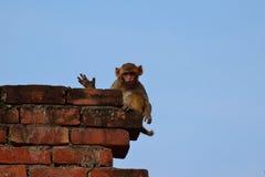 问好孩子的猴子 库存图片