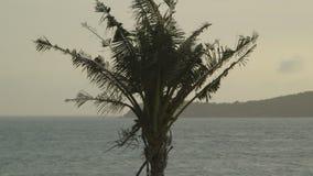 间距的棕榈树叶子,莫尔斯比村庄,巴布亚 股票视频