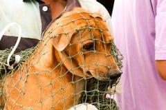 阉割狗和猫在世界狂犬病天 库存照片