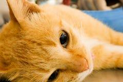 阉割狗和猫在世界狂犬病天 免版税库存照片