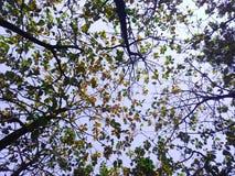 阔叶树 免版税图库摄影