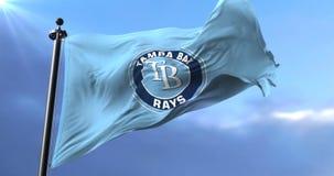 队坦帕湾的旗子发出光线,美国职业棒球,挥动-圈 股票视频