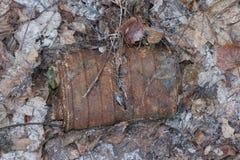 防毒面具RKKA老生锈的煤炭过滤器在下落的叶子中的森林里被投掷 免版税库存照片