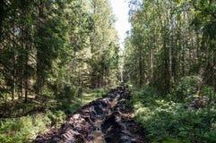 防火线在森林 库存照片