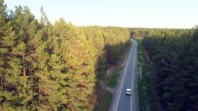 阳光光杉木冠上沿遮荫路的汽车驱动 股票视频