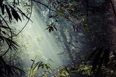 阳光光芒通过在雨林的叶子倾吐在Sinharaja F 库存照片