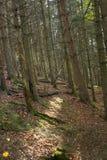 阳光切口通过深木头 库存照片